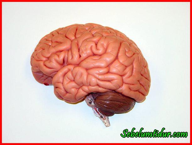 cara menyehatkan otak, cara melatih otak kanan, cara menyehatkan otak kanan