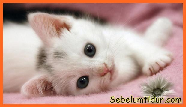 anak kucing baru lahir makan apa