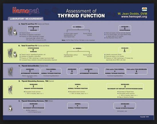 Hemopet Assessment of Thyroid Function