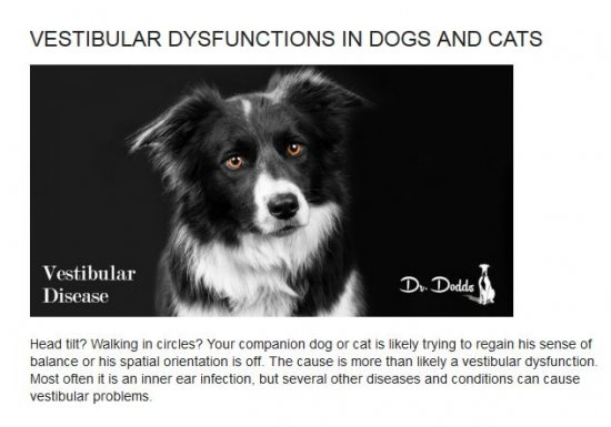 Dr. Dodds Vestibular Dysfunctions