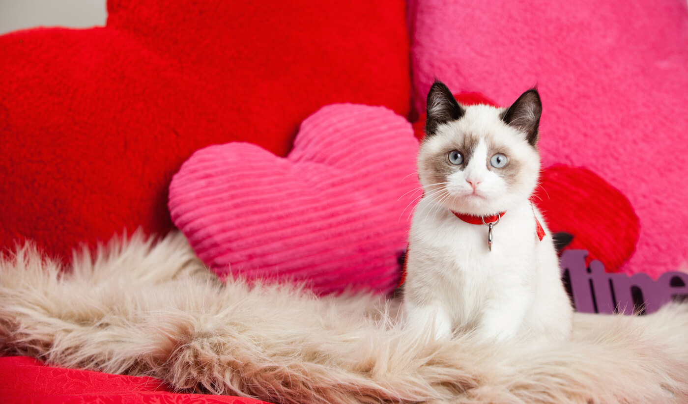 What To Do If Your Cat Leaves You Before Valentine's Day