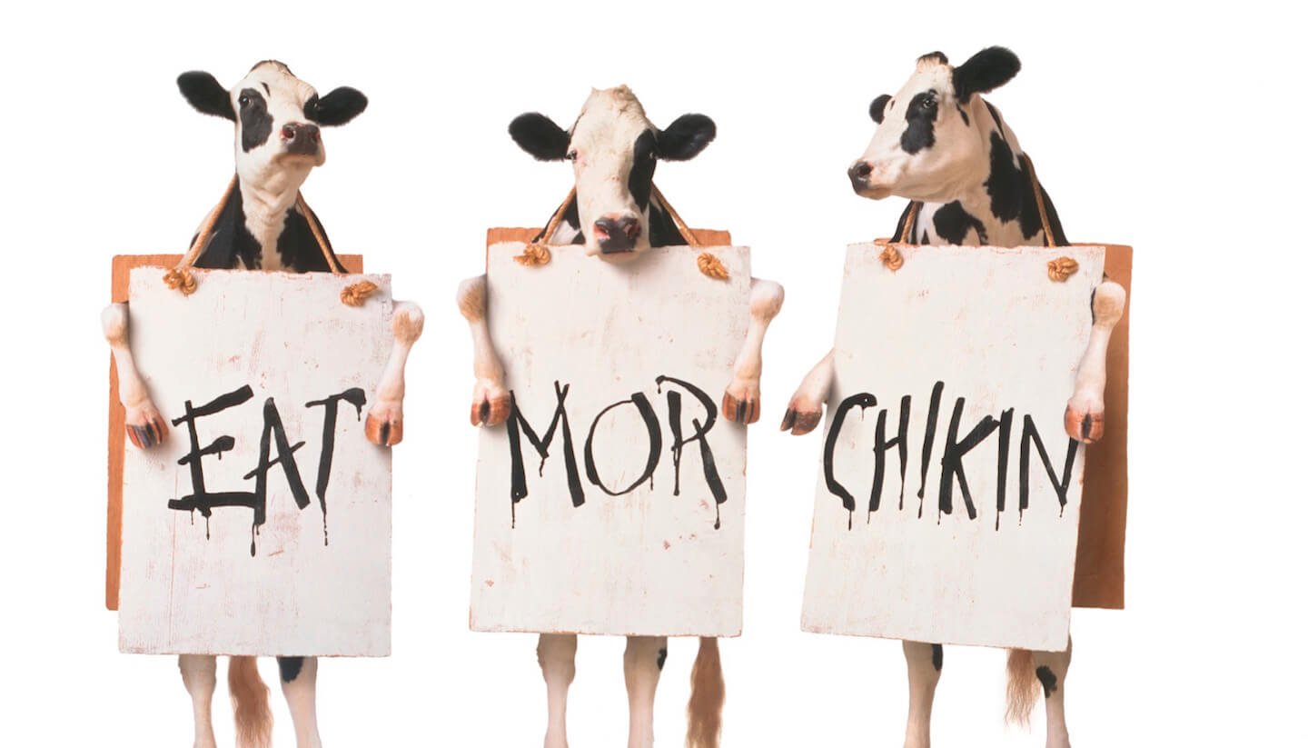A Message From The Chick Fil A Cows The Second City