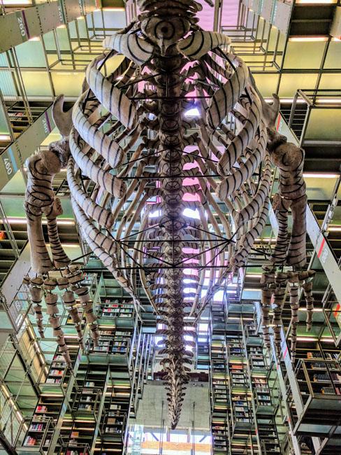 Whale skeleton, Biblioteca Vasconcelos, Mexico City