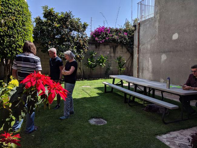 Livit's lovely back garden