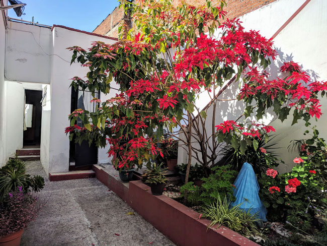 Lovely patio of my homestay where my room was located