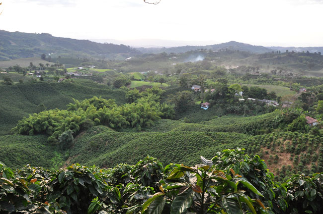 View onto Hacienda Guayabal