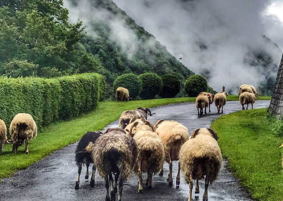 French Pyrenees - best vacations for introverts