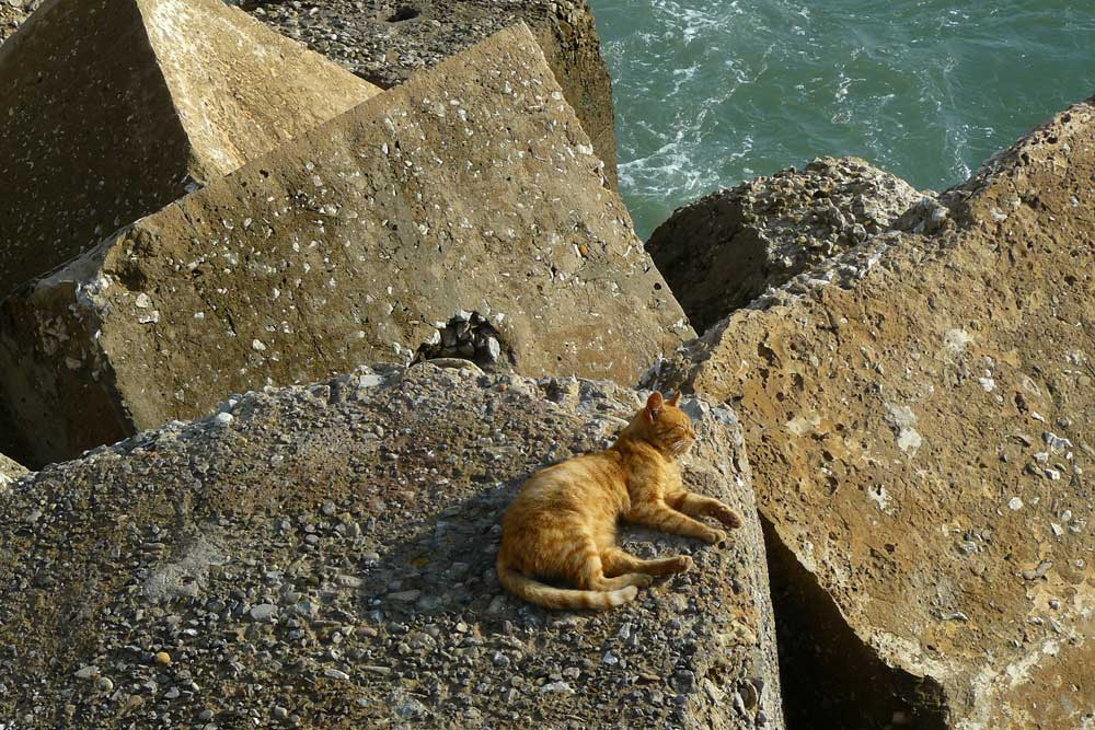 Cat on the breakwater, Cadiz