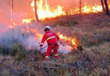 incendi nei boschi