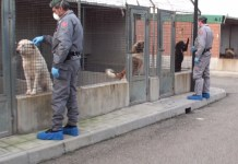 I carabinieri forestali di Reggio Calabria al canile municipale