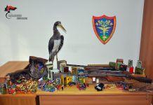 Il materiale sequestrato dal Nucleo operativo antibracconaggio dell'Arma