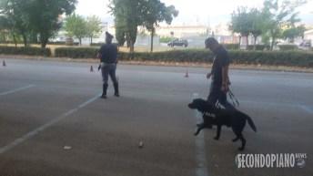 Controlli Polizia Cosenza (5)