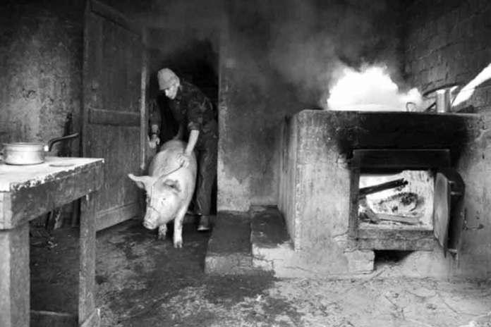 maiale-macellato-casa