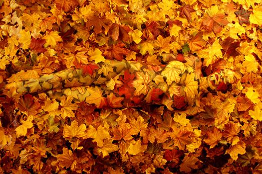 """""""Autumn"""". (Photo by Johannes Stötter)"""