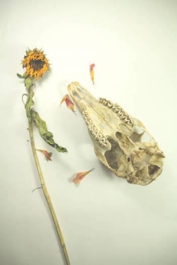 Upside-down-skull-with-sunflower optimised