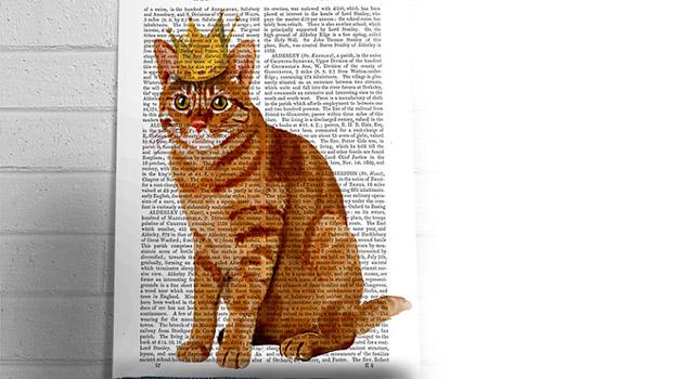 ginger cat king
