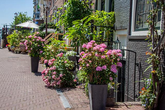 Цветы в Амстердаме