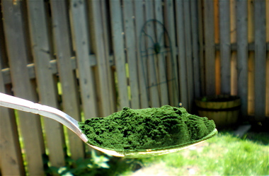 https://i2.wp.com/www.secrets-of-longevity-in-humans.com/images/health-benefits-of-chlorella-algae.jpg