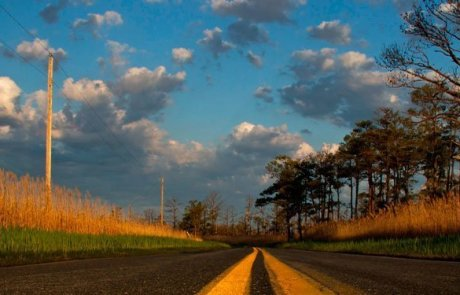 Elliotts Island Road by Jill Jasuta
