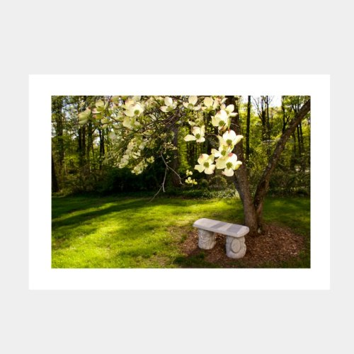 Dogwood in Bloom Greeting Card from Secrets of the Eastern Shore