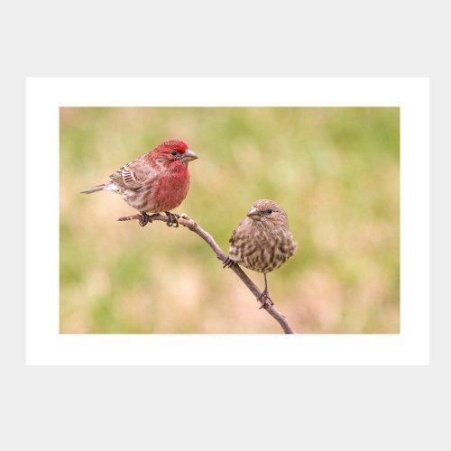 Finches on a Branch Greeting Card from Secrets of the Eastern Shore