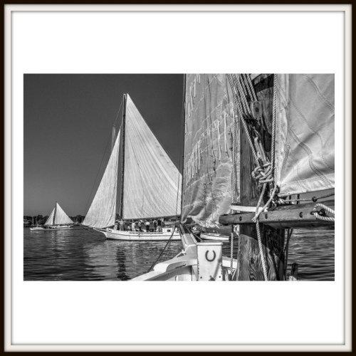 Skipjack Races Greeting Card