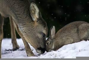 deer and bunny