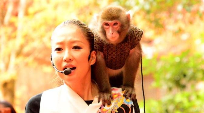 【紅葉】神戸モンキーズ劇場の猿回し@書写山圓教寺