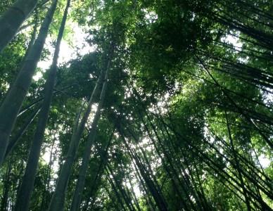 Grupo Bamboo Puebla