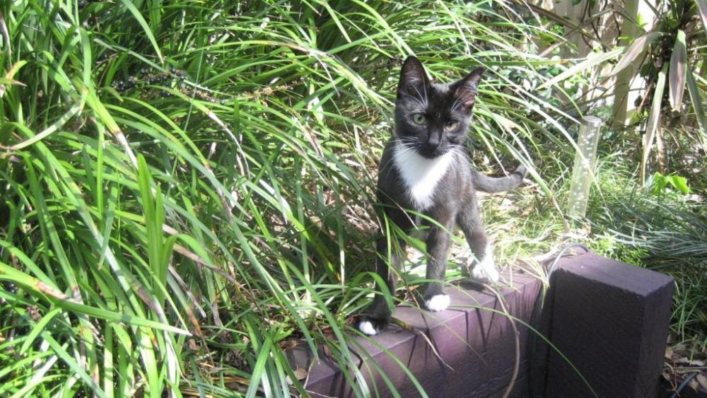 Cat Enclosure Country