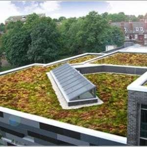 Leeds Univesity Sedum Green Roof