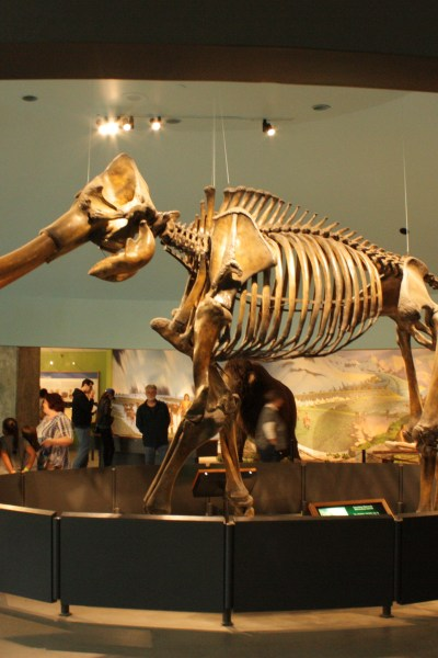 Visiting The La Brea Tar Pits & Museum