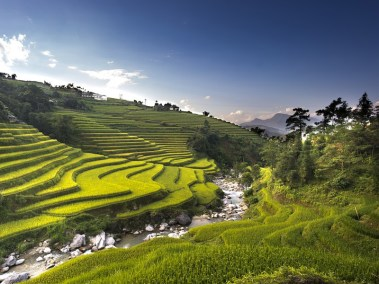 Vietnam Holidays and Amazing Rice Fields