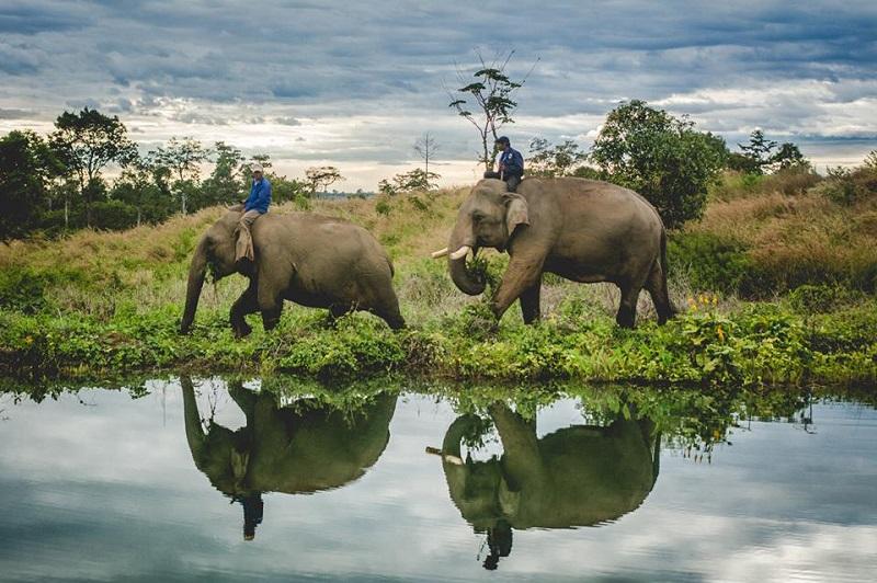 Airvata Elephant Foundation
