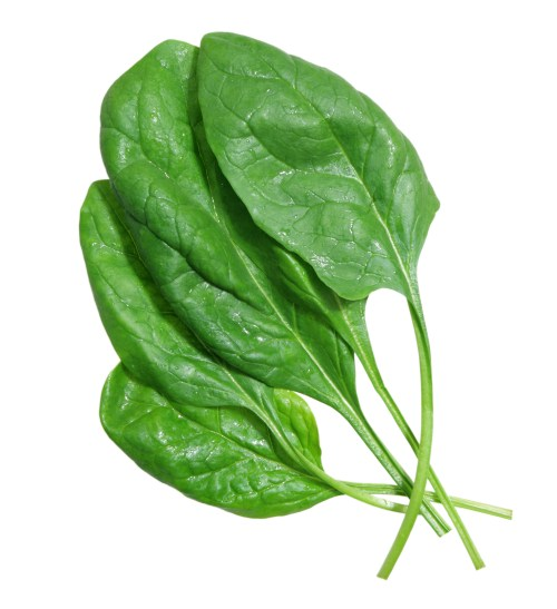 growing spinach, how to grow spinach