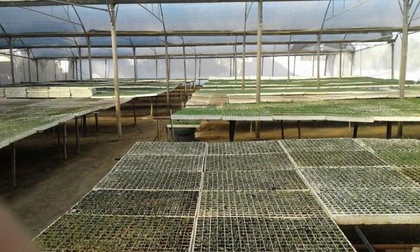 eps seedling trays