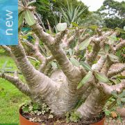 Grow Unusual And Exotic Succulent Plants From Seeds