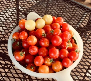 how to dry cherry tomatoes