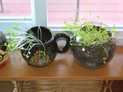 Coffee Cup Herb Garden
