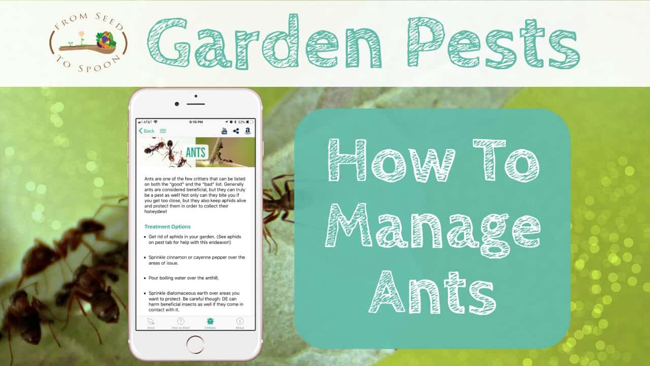 How to: Manage Ants in Your Garden - From Seed to Spoon