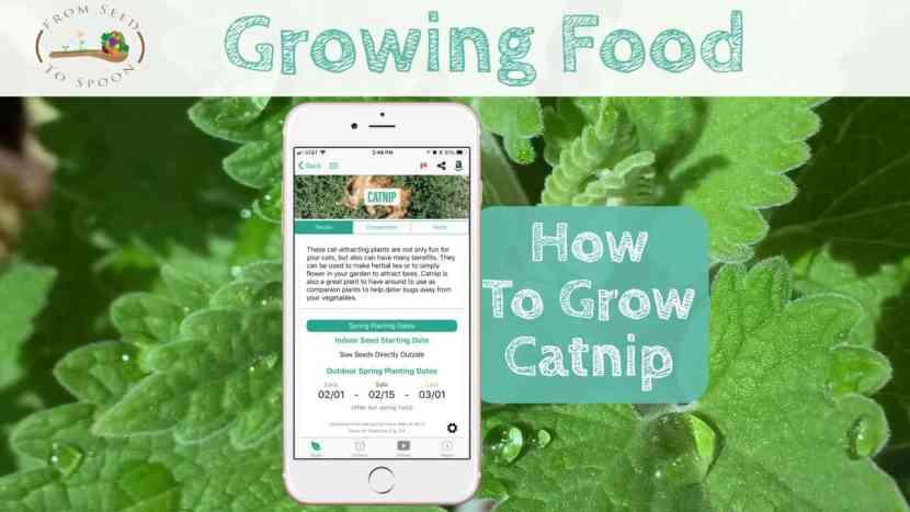 Catnip blog post