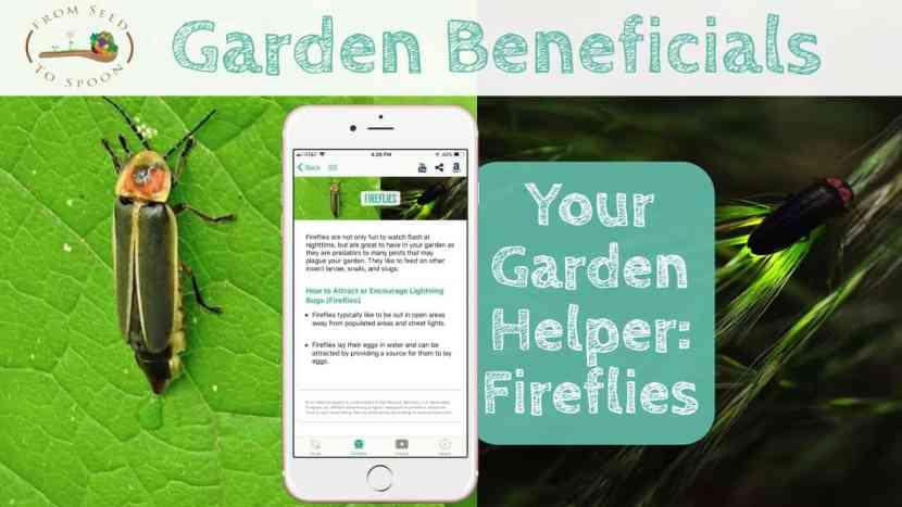 Fireflies blog post
