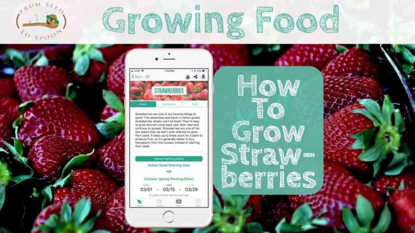Strawberries blog post