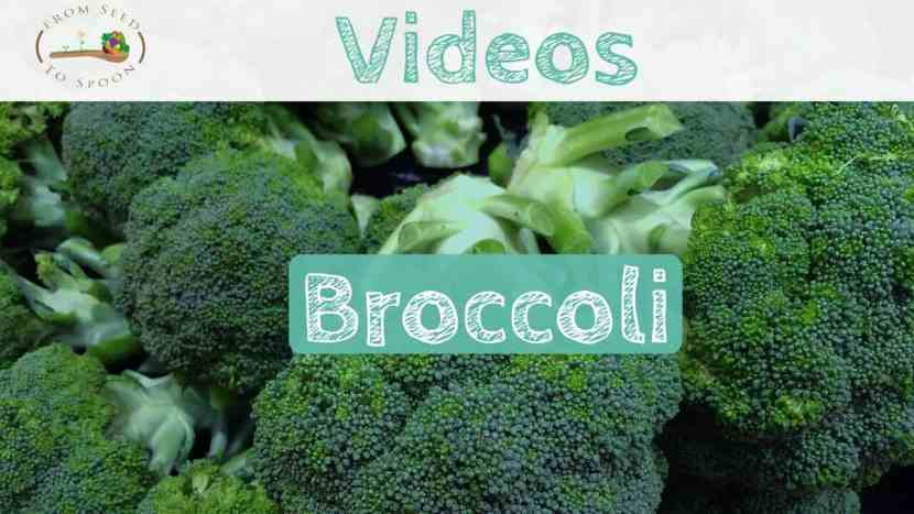 Broccoli blog post2(1)