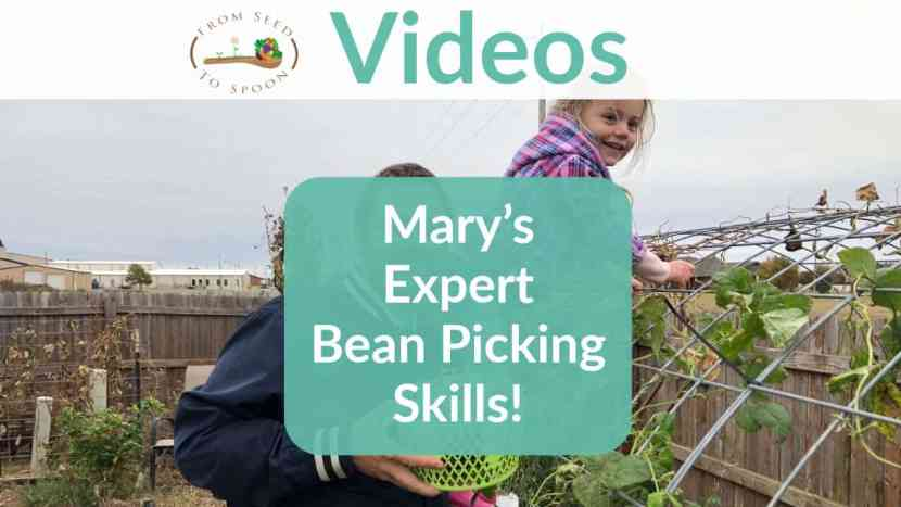 Watch Mary's Expert Bean Picking Skills