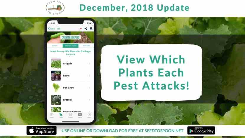 This update adds one of our most frequently requested features to our From Seed to Spoon app that makes growing food simple. You can now view plants that are typically attacked by each pest! We also added several new plants and critters, and will be bringing you more over the next few updates. Email us at info@seedtospoon.net or contact us on social media to let us know what you'd like to see added!
