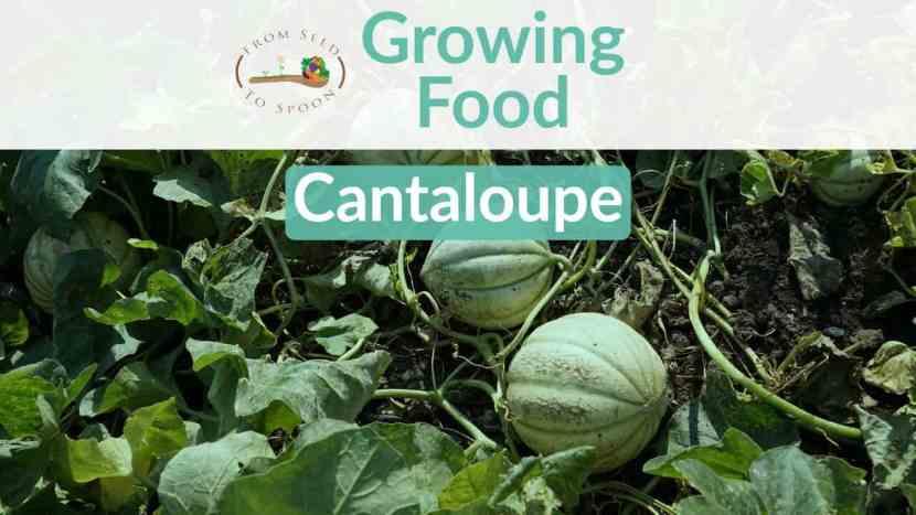 Cantaloupe blog post