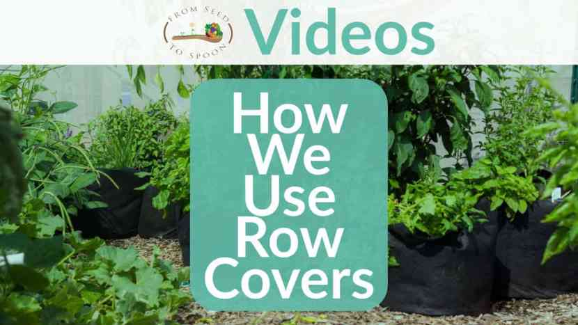 How We Use Row Covers