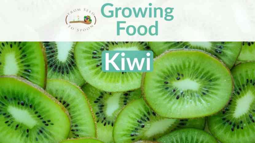 Kiwi blog post