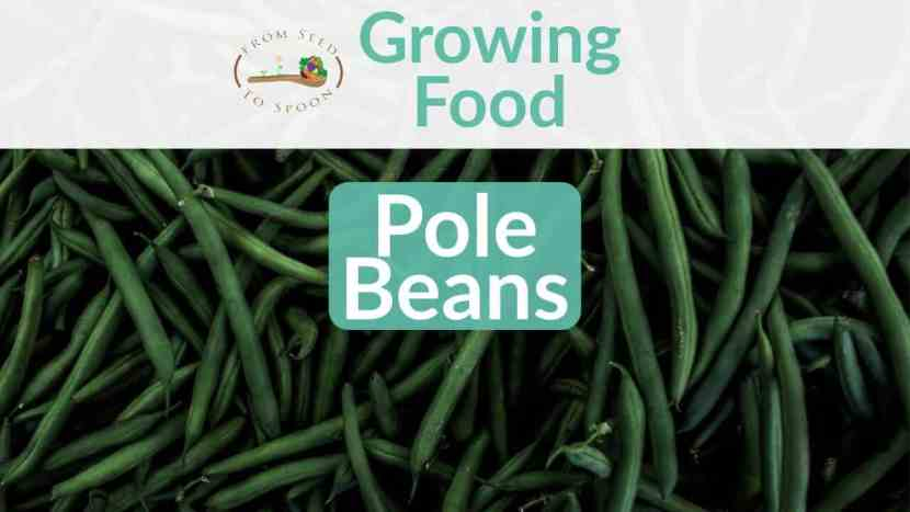 Pole Beans blog post